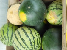Fresh Melons at Bread & Roses CSA